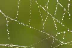 Spiders web Royalty Free Stock Photos