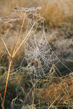 Spiders Web. Royalty Free Stock Images