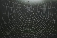 Free Spiders Web Royalty Free Stock Images - 50670749