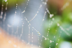 Spiders web Stock Image