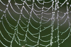 Spiders Web. In the morning dew Stock Photos