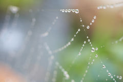 Spiders web Stock Photography