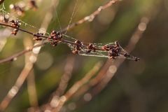 Spiders web on an autumn morning royalty free stock photos