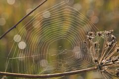 Spiders web on an autumn morning stock image