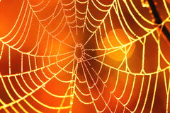 Spiders web B. Photograph of a spiders web at sunrise Stock Photo