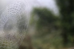 A Spiders Web Covered in Dew. An intricate spiders web in a field covered in dew in the early morning. There are trees and other vegetation blurred in the stock image