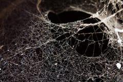Spiders web Stock Photo