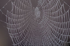Spiders web with dew on a dark background. Stock Photo