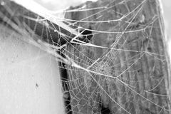 Spiders Web. A web in the early morning with dew Royalty Free Stock Photography