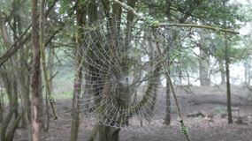 Spiders web early morning in the forest 4 royalty free stock image
