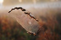 Spiders web in the field Royalty Free Stock Photography