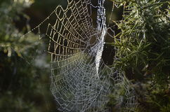 Spiders Web Royalty Free Stock Image