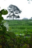 Spiders web. Stock Photos
