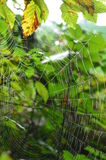 Spiders web. Stock Images