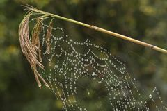 A spiders web on a green background stock images