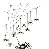 Spiders and web. Illustration of spiders and spiderweb on white background Stock Photos