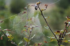 Spiders Web. Royalty Free Stock Photo