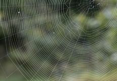 A spiders web royalty free stock image
