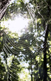 Spiders web with lightning in the back Stock Photography
