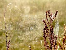 Spiders web on a meadow at sunrise Stock Images