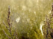 Spiders web on a meadow at sunrise Stock Photography
