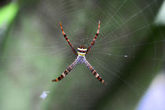 Spiders in web Stock Images