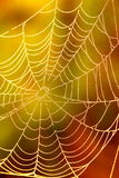 Spiders web A Royalty Free Stock Photos