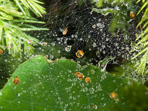 Spiders web after rainfall Stock Image