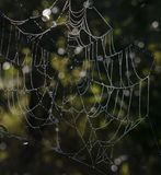 A spiders web stock image