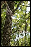 Spiders web. Spiderweb in the forest blowing in the wind Royalty Free Stock Photo