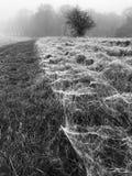 Spiders webbing in field stock image