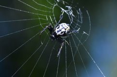Spiders. Webs in the forest Thailand Stock Photography