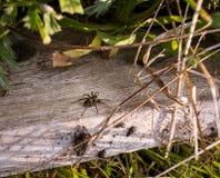 Spiderwalk Stock Image