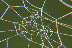 Spiderweb。下落。 免版税库存照片