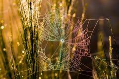 Spiderweb在森林 免版税库存照片