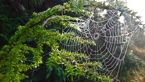 Spiderweb在霜盖了 图库摄影