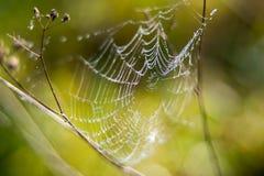spiderweb,自然秀丽 免版税库存图片