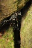 Spiderweb łapał w skałach Zdjęcie Royalty Free