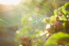 Spiderweb świetlistość przed zmierzchem obraz stock