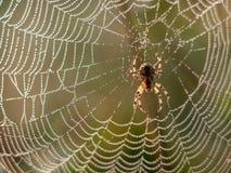 Spiderweb που καλύπτεται στη δροσιά στοκ φωτογραφία με δικαίωμα ελεύθερης χρήσης