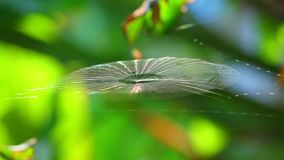 Spiderweb που πιάνει το αεράκι και το φως του ήλιου Bokeh Backgroung πρωινού απόθεμα βίντεο
