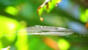 Spiderweb που πιάνει το αεράκι Bokeh Backgroung πρωινού φιλμ μικρού μήκους