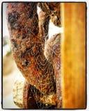 Spiderweb и цепи стоковая фотография rf