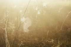 Spiderweb, который замер заморозок зимы стоковое изображение