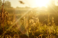 Spiderweb макроса Стоковое Изображение