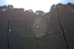 Spiderweb между ветвями australites Стоковые Фото