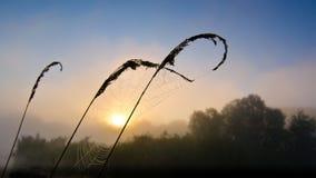 Spiderweb на цветастом туманном рассвете на озере Стоковые Изображения RF