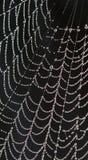 spiderweb падений росы Стоковое Изображение