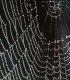 spiderweb падений росы Стоковые Фото