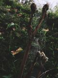 spiderweb Arkivfoto